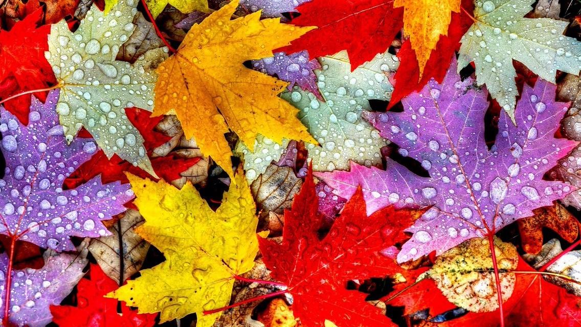 Genieten van de herfst!
