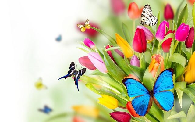 Een voorjaar vol nieuwe plannen!