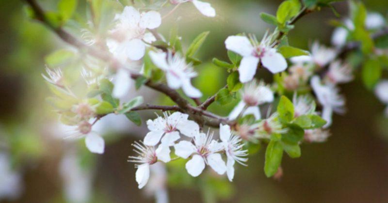Bijna voorjaar…